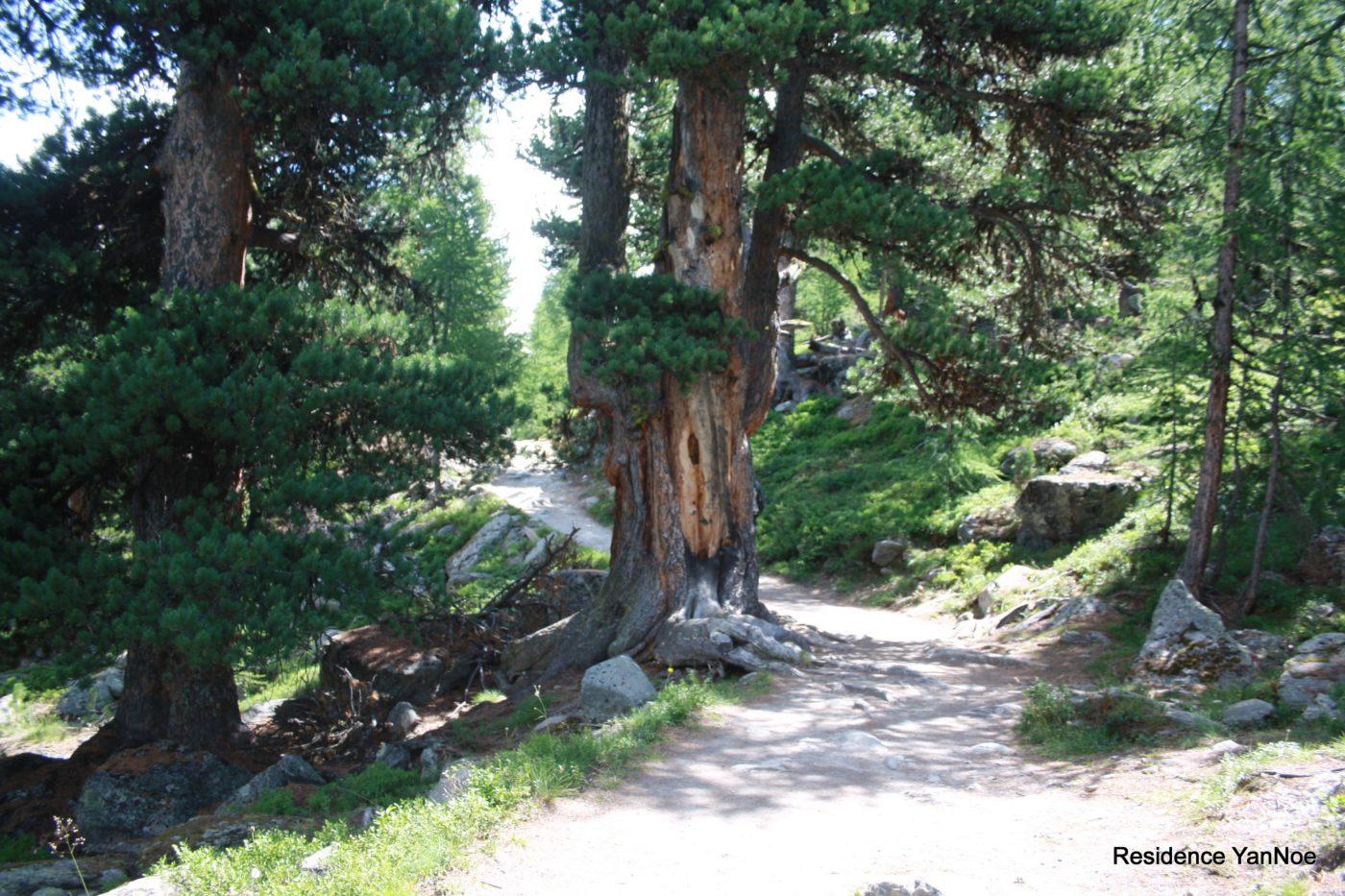 Mountainbiken | Residence YanNoe